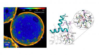 <p>Imagen de TEM de las microcápsulas de silica huecas / IBEC   </p>