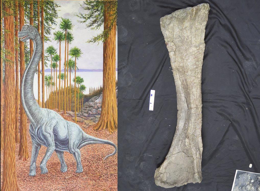 Descubren un nuevo gran dinosaurio saurópodo en Soria / Noticias / SINC