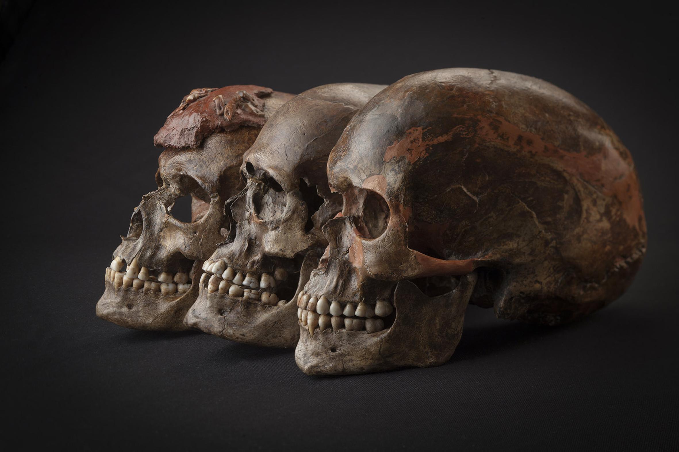 El ADN antiguo revela las migraciones en la Europa de la Edad de hielo