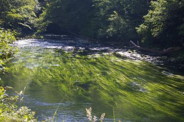 <p/>Las algas son vulnerables a los cambios en su entorno. / <a href=
