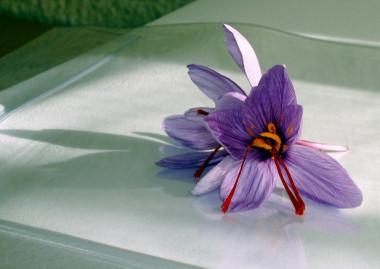 <p/>Estigmas de azafrán (<em>Crocus sativus</em>) / <a href=