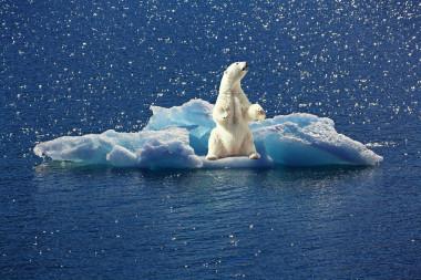 """<p/>Oso polar encima de una placa de hielo. / Pixabay"""" /><span style="""