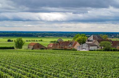 <p>En el caso de Savagnin Blanc, una uva que data de entre los años 1050 y 1200, es genéticamente idéntica a la actual / Pixabay</p>