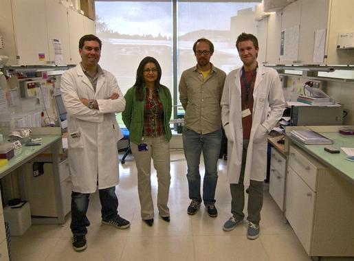 Encontrada una posible diana para combatir los cánceres de hígado y colon