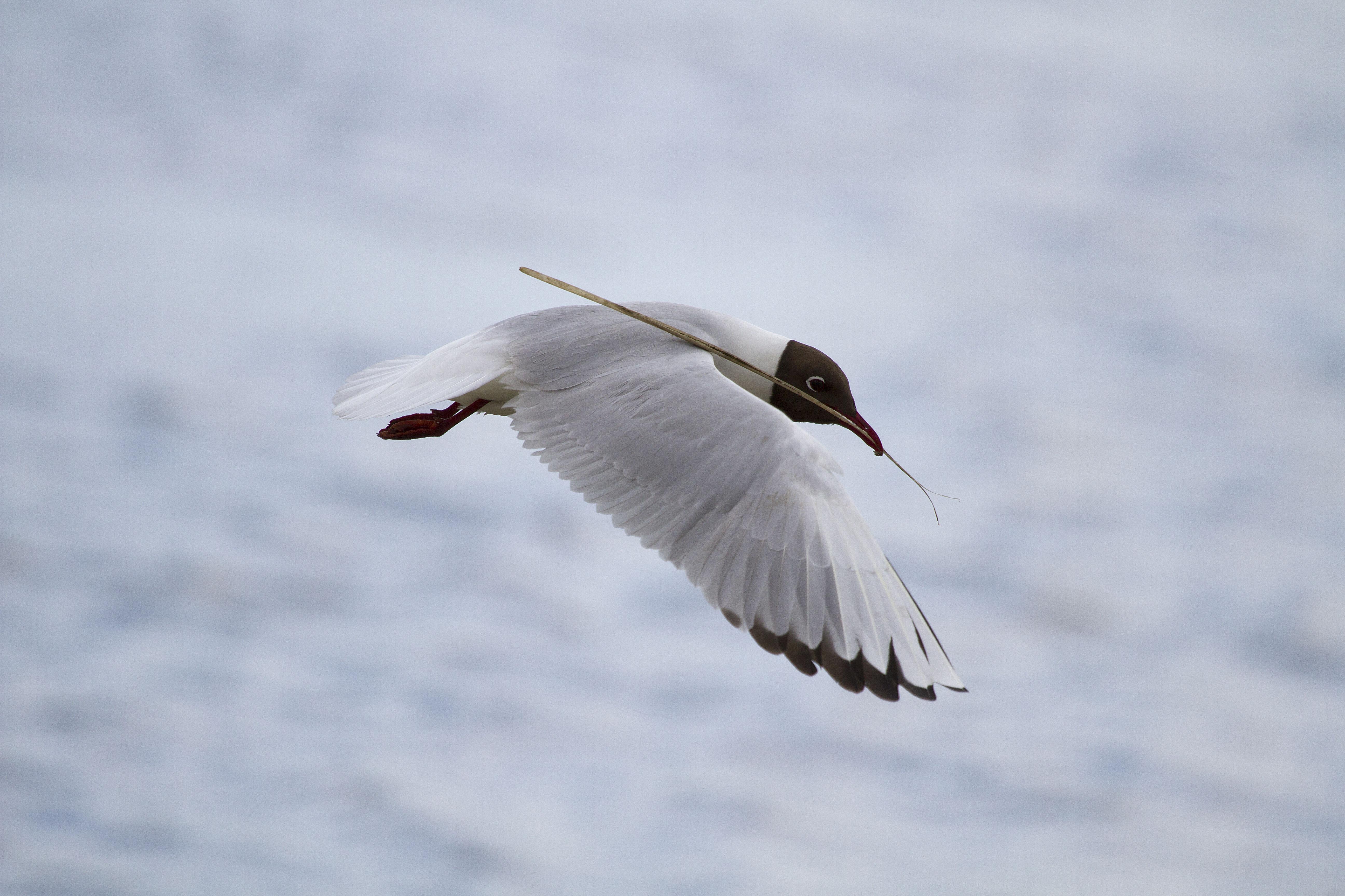 España posee la mayor superficie marina protegida para las aves