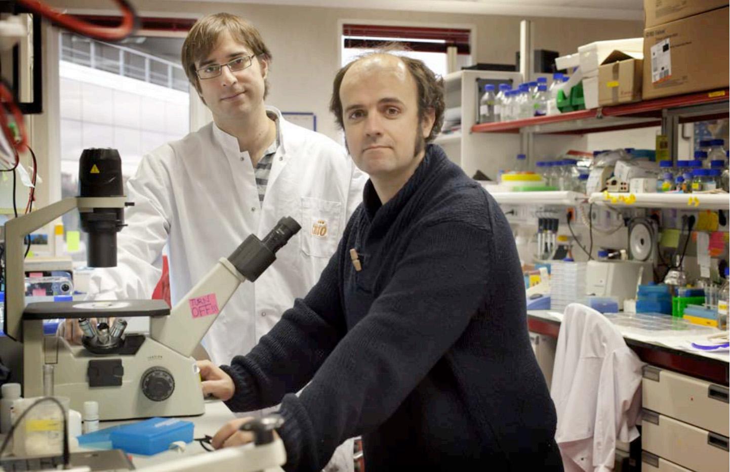 'Fotografían' por primera vez la replicación del genoma humano