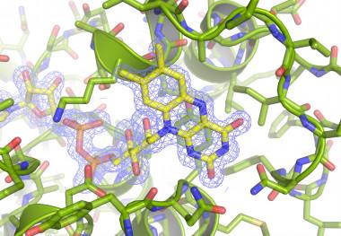 <p>Detalle de la estructura tridimensional de la proteína a resolución atómica / IRNASA</p>
