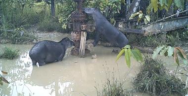 Animales salvajes en una zona contaminada. / UAB