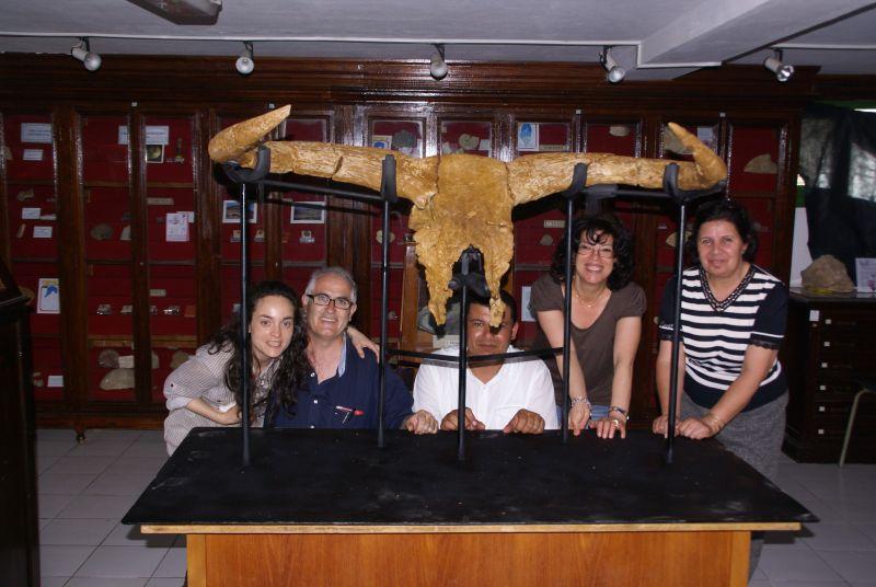 Identifican en Túnez el cráneo de toro moderno más antiguo del mundo