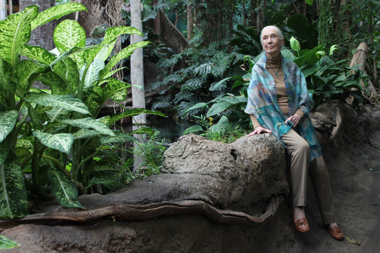 Jane Goodall en barcelona. / Núria Jar, SINC