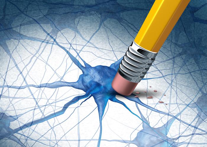 La creación de nuevas neuronas provoca la pérdida de antiguos recuerdos