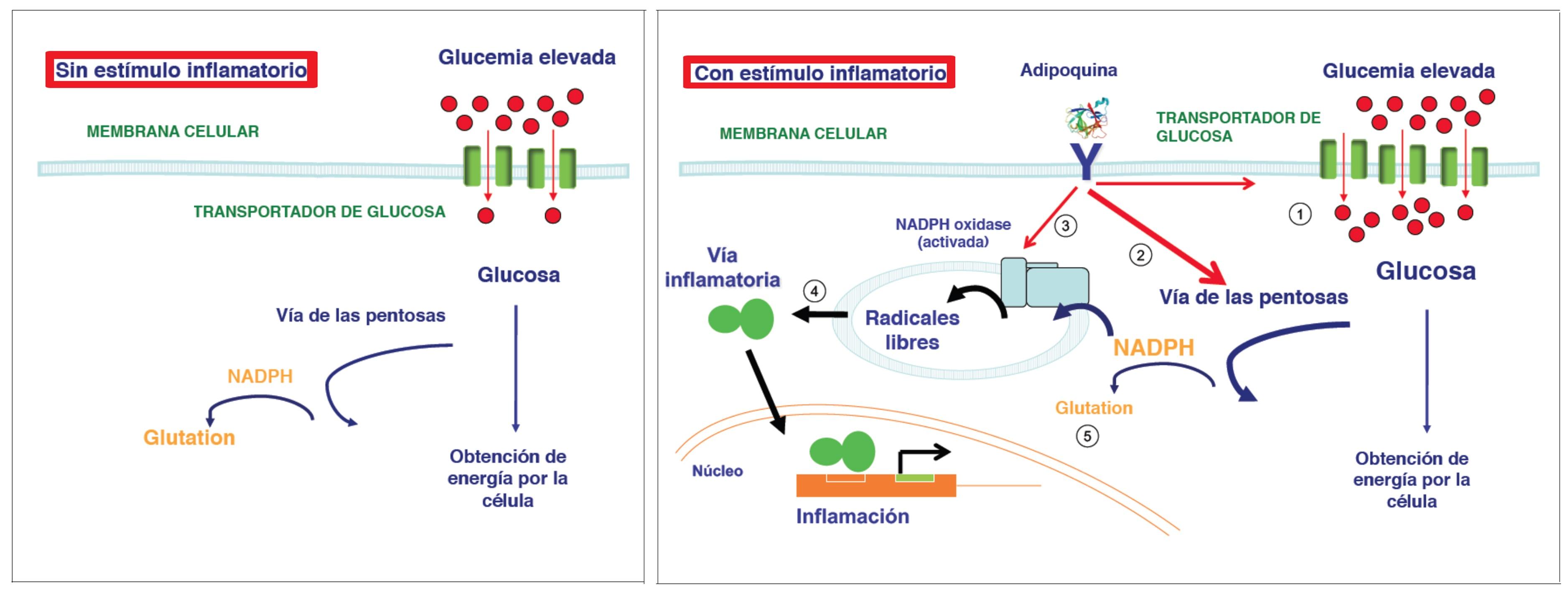 causas de aumento y disminucion de glucosa en sangre
