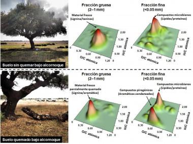 <p>Los mapas de densidad muestran abundancias acumuladas de distintos tipos de componentes orgánicos identificados mediante FTICRMS en suelos afectados o no por el fuego, clasificados en el espacio definido por las relaciones atómicas H/C y O/C de las correspondientes moléculas. Puede observarse que el efecto del fuego es muy diferente en las partículas de suelo de distinto tamaño /MNCN-CSIC</p>