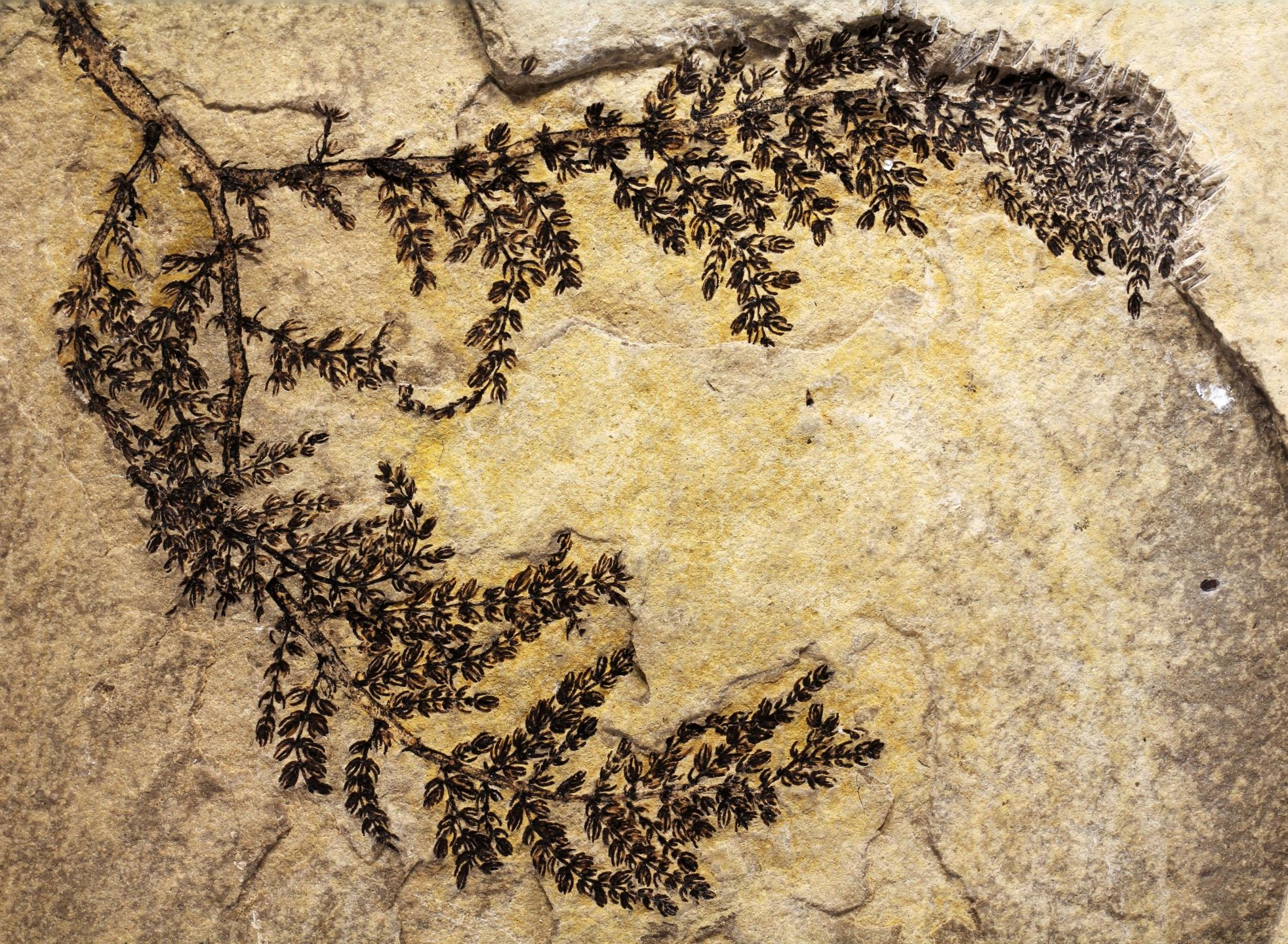 La primera planta con flor apareció hace 130 millones de años en España