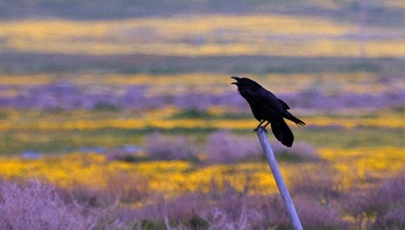 Las aves más inteligentes se estresan menos