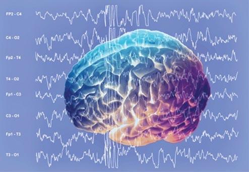 Las ondas delta de la corteza cerebral intervienen en la toma de decisiones