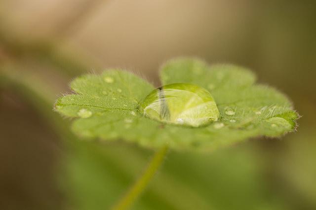 Las plantas optimizan el uso del agua según el ambiente en el que viven