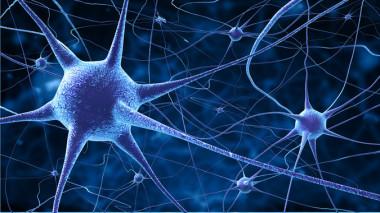 <p>El equipo ha usadoherramientas de neuroingenieríapara diseñarcircuitos neuronalesin vitro que reproducen la capacidad de segregación e integración de los circuitos cerebrales. / Fotolia</p>