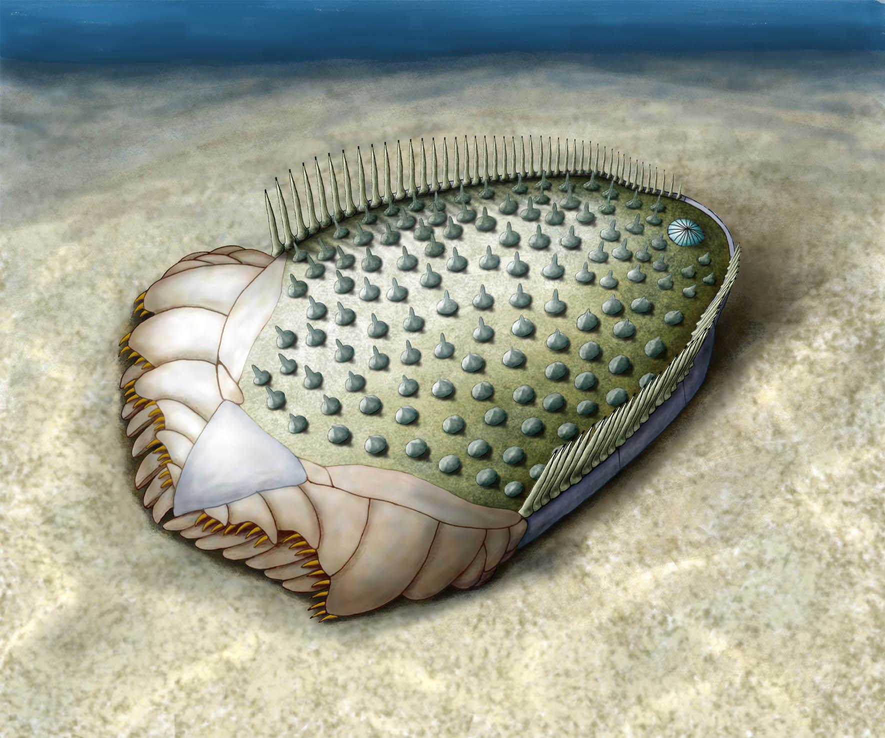 Los antepasados más remotos de las estrellas de mar tenían simetría ...