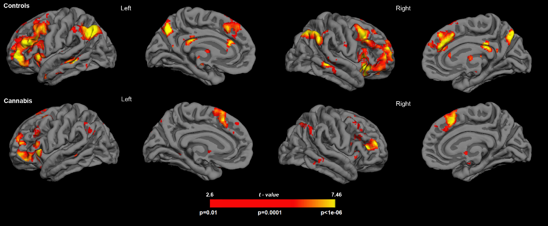 Los consumidores de cannabis son más susceptibles a tener falsos recuerdos