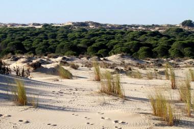 """<p/>Parque Nacional de Doñana. / Pixabay"""" /><span style="""