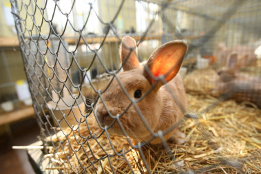 """<p/>Los científicos realizan test de toxicidad <em>in vivo</em> usando modelos animales que proporcionan una referencia química segura para los humanos. Pero un nuevo estudio propone una alternativa. / Fotolia"""" /><span style="""