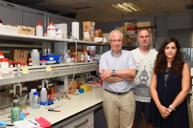 """<p/>De izquierda a derecha, Ramón Martínez Máñez, Felix Sancenón y Mª del Mar Oroval, investigadores de la UPV y del CIBER-BBN. / UPV"""" /><span style="""