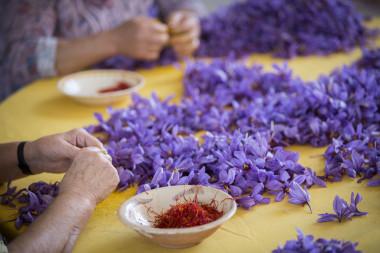 """<p/>El estigma rojo de la flor del azafrán es una de las especias más antiguas y caras del mundo./ DOP Azafrán de La Mancha"""" /><span style="""