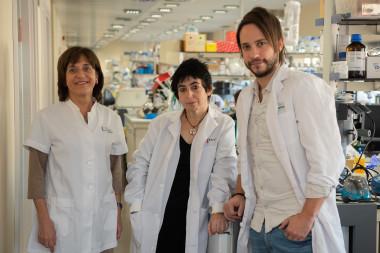 <p>Los investigadores Anna Novials, Marcelina Parrizas y Carlos Castaño. /CIBERDEM | IDIBAPS</p>