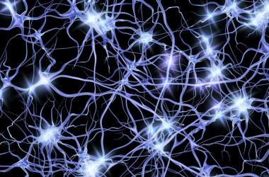 "<p>Every one to four seconds waves of neural activity travel from one point to another in the cerebral cortex. / <a href=""https://www.flickr.com/photos/pennstatelive/32617171062/"" target=""_blank"">Penn State</a></p>"