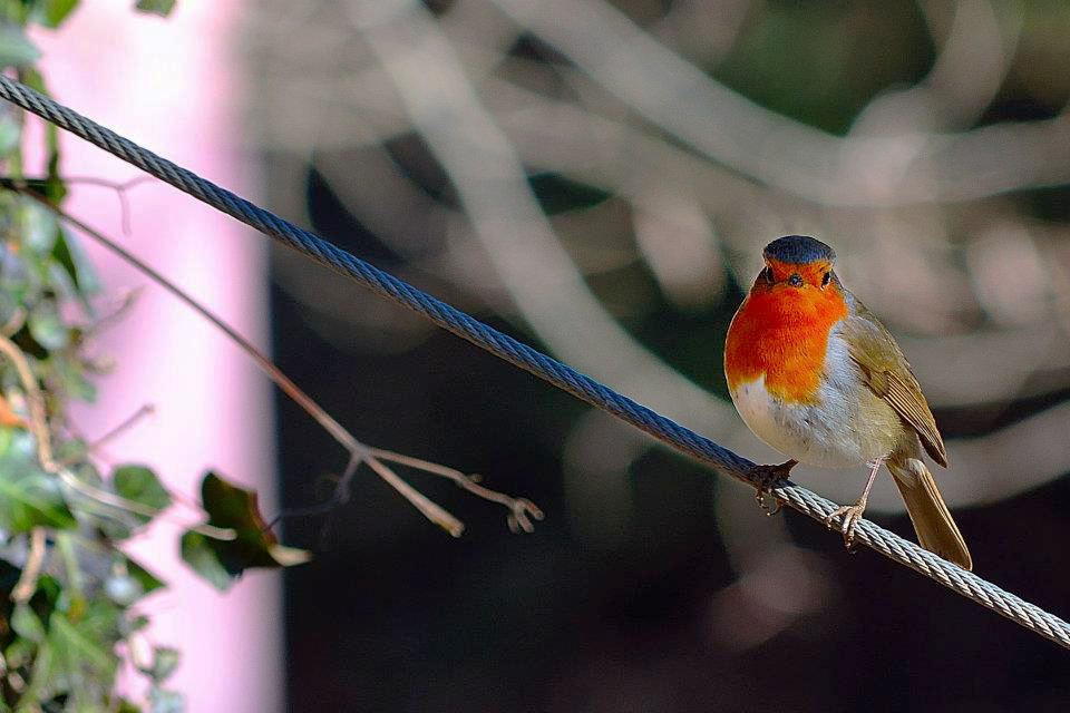 Pájaros y mariposas, indicadores clave para medir la pérdida de biodiversidad