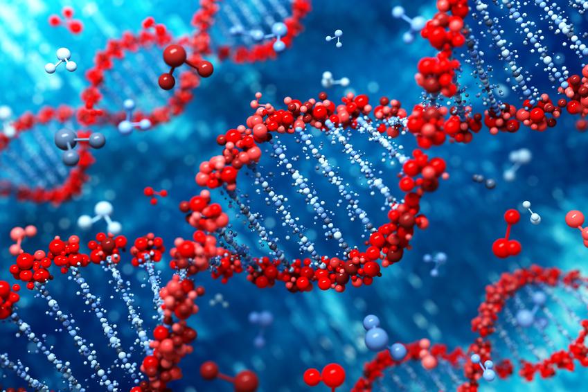 Partes del genoma sin función conocida podrían participar en la formación de nuevas proteínas