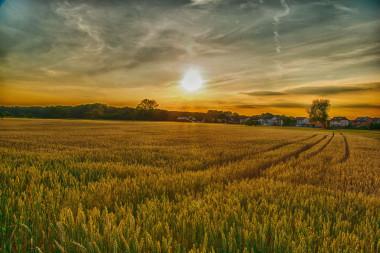 Existe un escenario en el que podríamos alimentar al mundo con un nivel de contaminación inferior al actual. / pixabay.