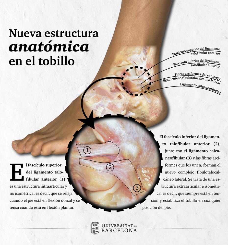 inflamación del tobillo adolorido sin lesiones