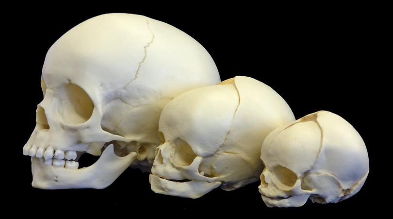 Relacionan la autodomesticación humana y su evolución cerebral