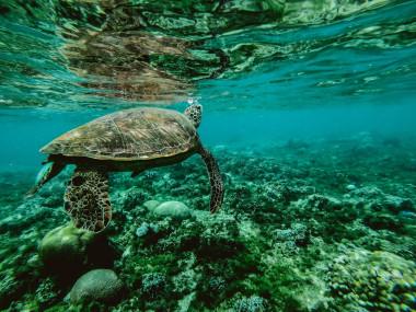Solo-un-13-de-los-oceanos-del-mundo-permanece-salvaje_image_380