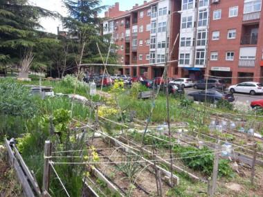 <p>Huerto urbano Villa Rosa de la Rehdmadque se ofreció a colaborar en el estudio. / Miguel Izquierdo</p>