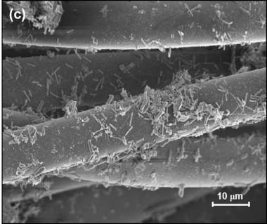 """<p/>Imagen de microscopía de la tela analizada con bacterias adheridas a las fibras del tejido. / Fundación Descubre"""" /><span style="""