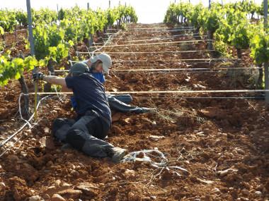 <p>Mediciones en Extremadura (Tierra de Barros) con Manuel Pulido / Universidad de Málaga</p>