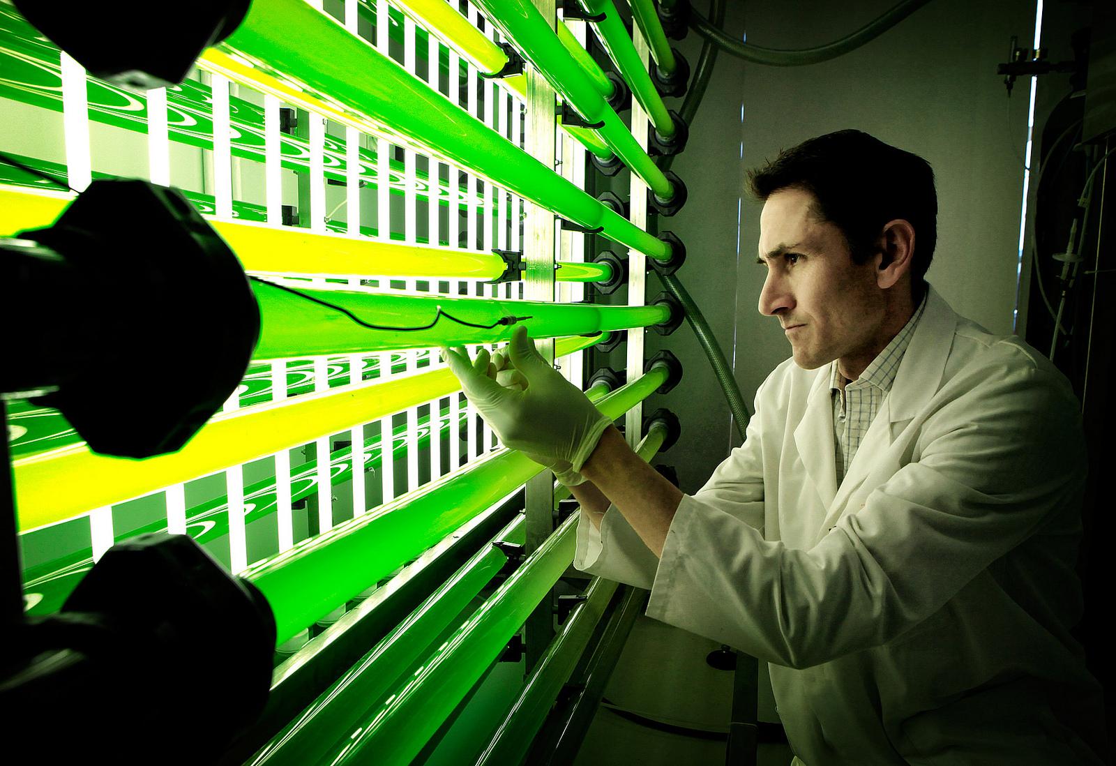 Un nueva técnica utiliza la captura de CO2 para alimentar cultivos de microalgas