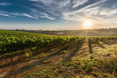 <p>Un subproductoobtenido de la madera de poda de la viña puede reemplazar al dióxido de azufre en la elaboración y conservación del vino. / Pixabay</p>