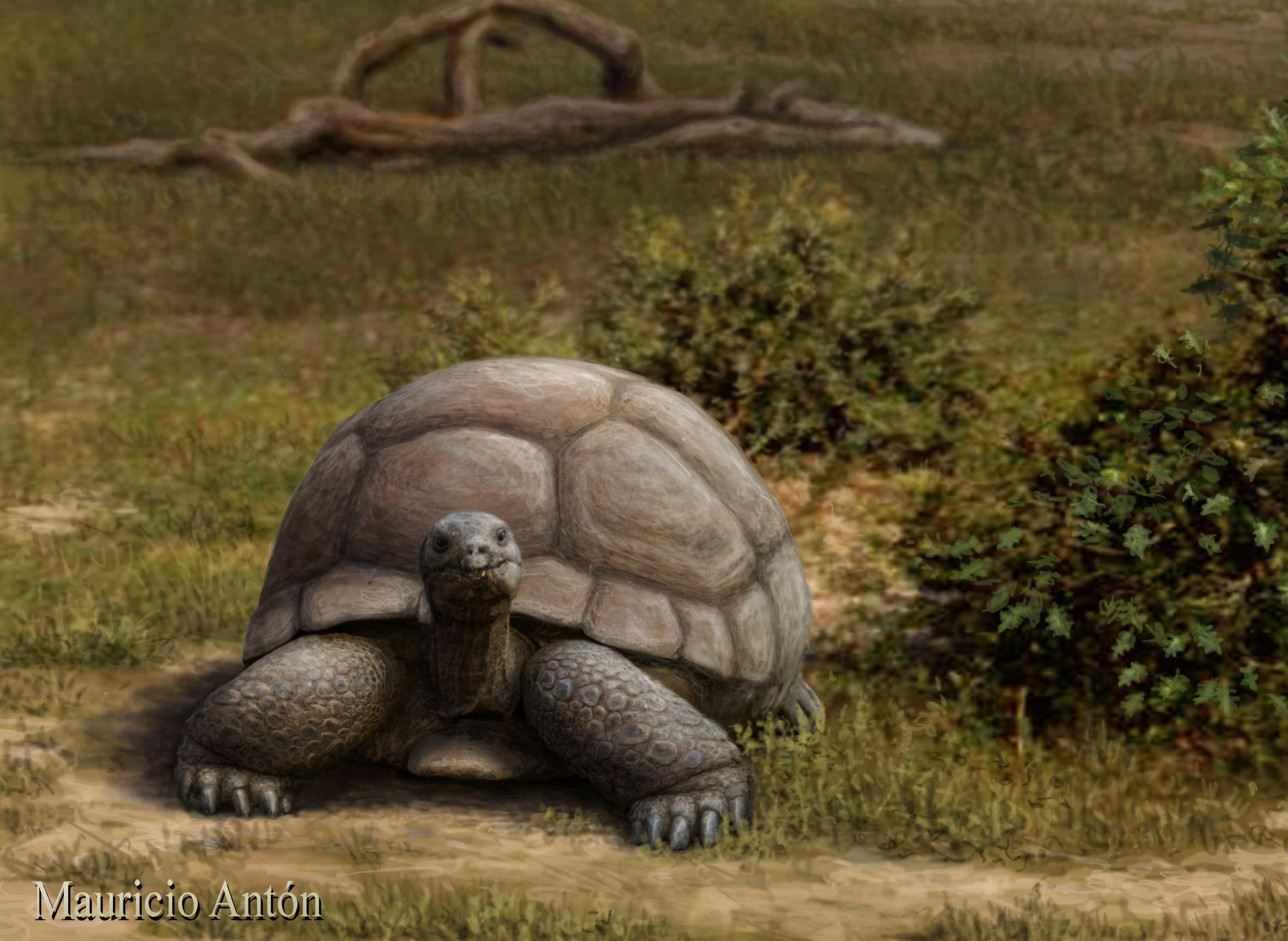 Una tortuga terrestre gigante habitó Europa hace 15 millones de años ...