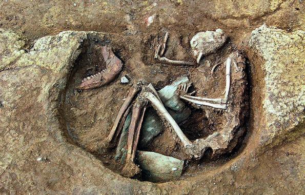 <p>Inhumación individual encontrada cerca del tholos de La Pastora. Junto al esqueleto humano aparecen los restos de una mandíbula de buey. En la Edad de Cobre (como en el Neolítico y la Edad del Bronce) era muy normal dejar grandes trozos de carne como ofrenda funeraria a los muertos. / Juan Manuel Vargas Jiménez</p>
