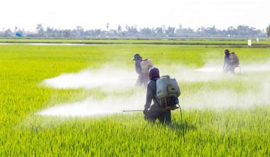 """<p/>Fumigación en un cultivo agrícola. / AdobeStock"""" /><span style="""