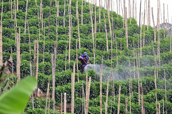 <p/>Algunos productos fitosanitarios son sospechosos de contener disruptores endocrinos. Imagen: <a href=