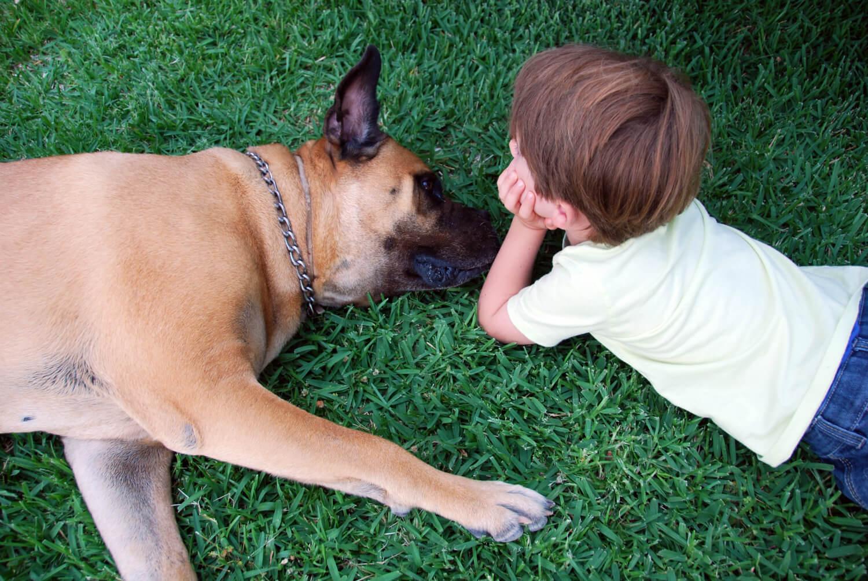Perros y humanos, unidos por el cáncer / Reportajes / SINC